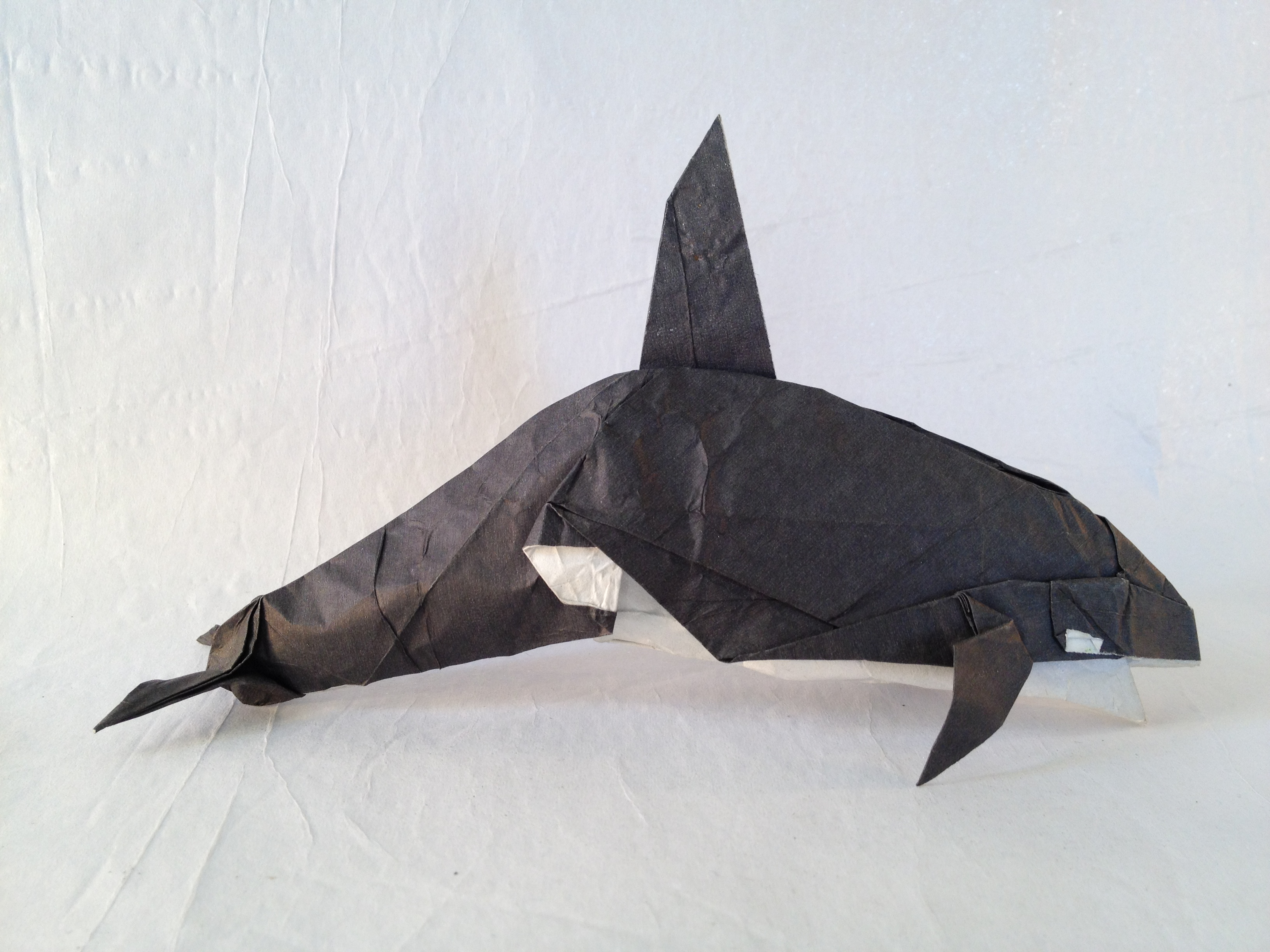 Killer Whale Friesen Folding