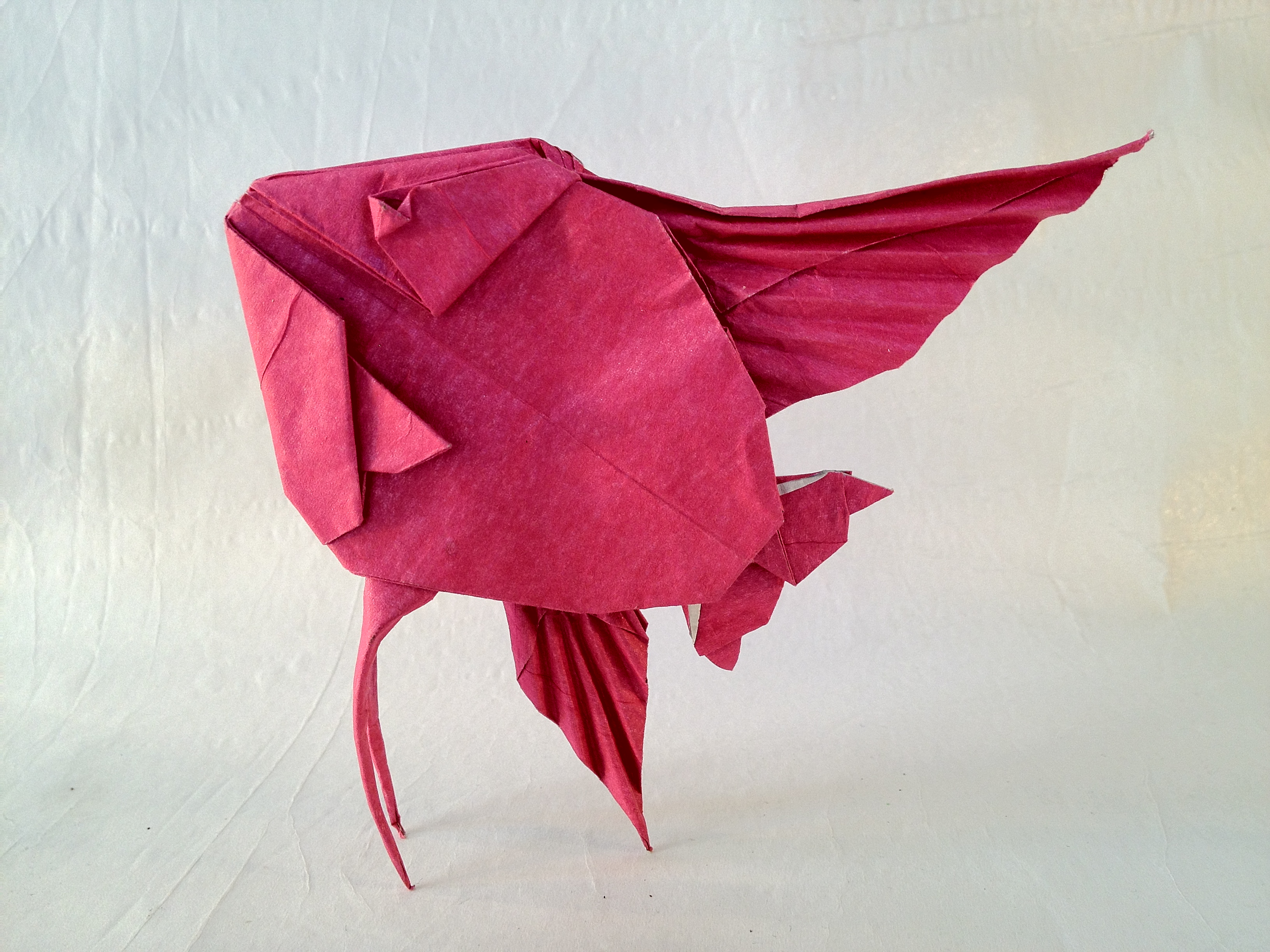 66 Origami Angel Fish Designs And How Tous Images On Diagram Friesen Folding